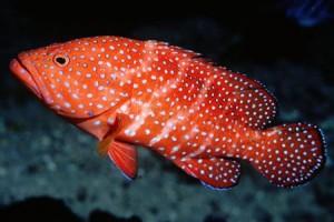 fish-1-300x200