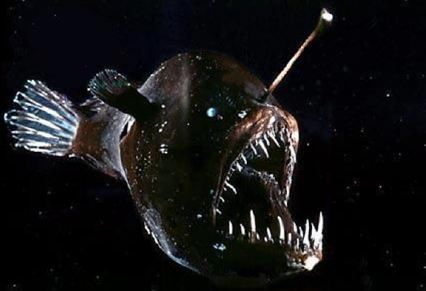 Black Anglerfish