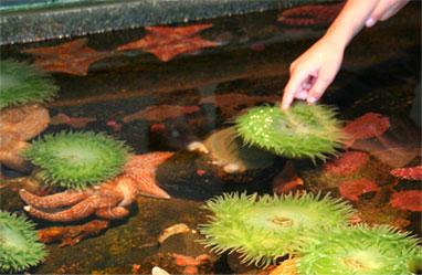 Animal Adventure Attraction in Branson Missouri - Feed The ...