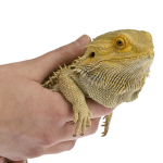 "Reptile ""Hands On"" Display - Interact with all sorts of reptiles including bearded dragons, snakes, lizards and more!"
