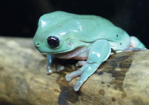 whites-frog-8-5001
